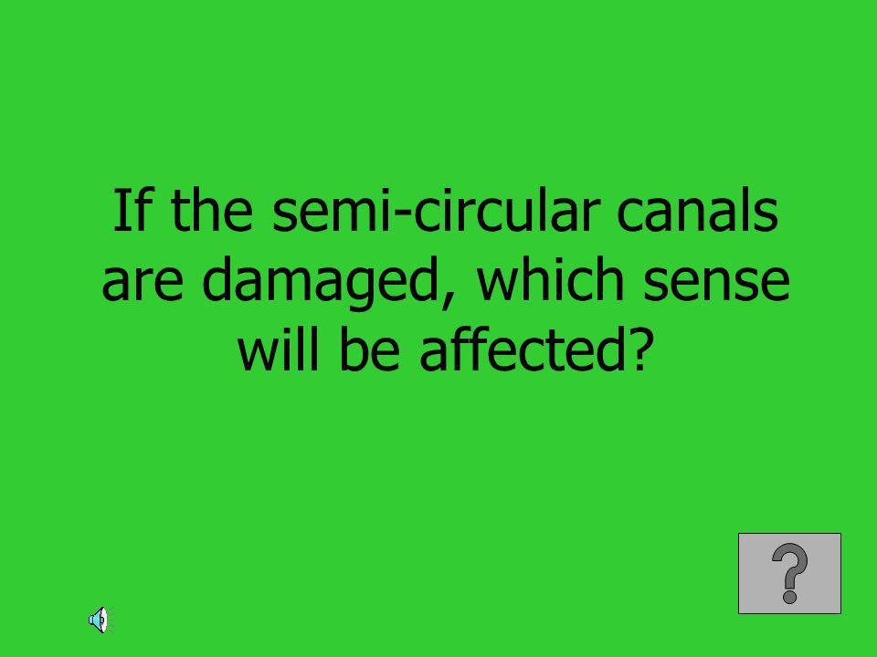 If the semi-circular canals are damaged, which sense will be affected