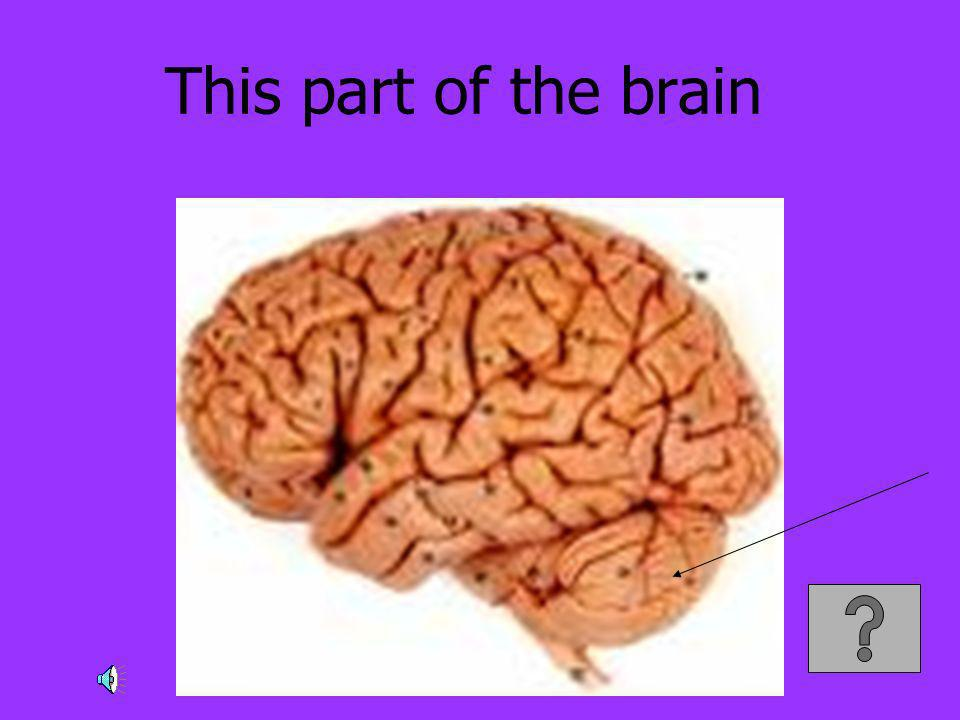 This part of the brain