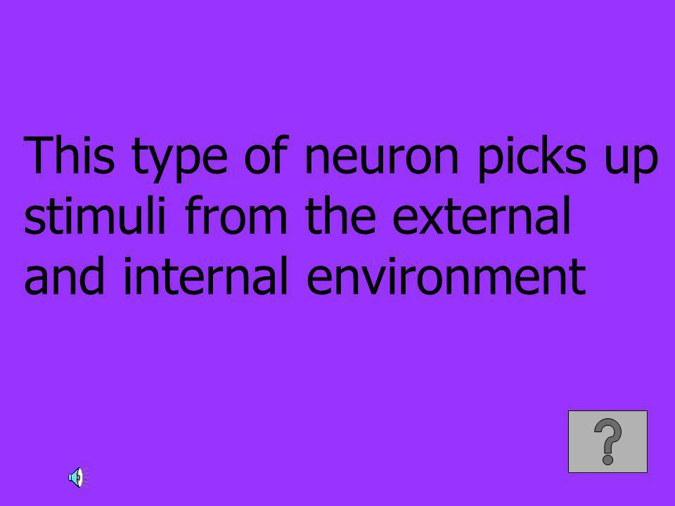 This type of neuron picks up stimuli from the external and internal environment