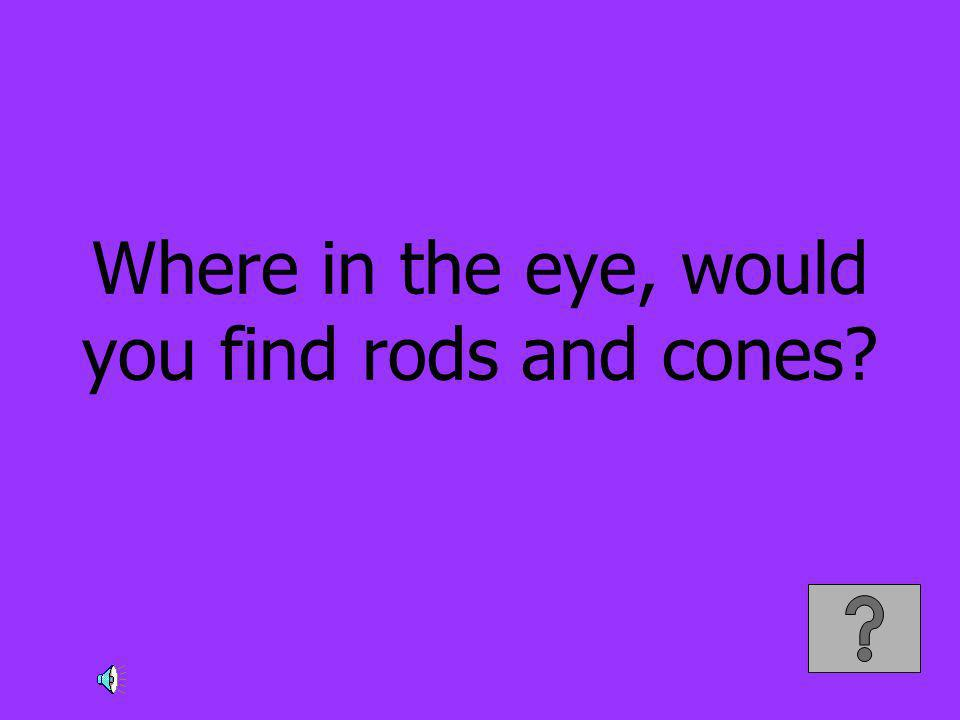 Where in the eye, would you find rods and cones