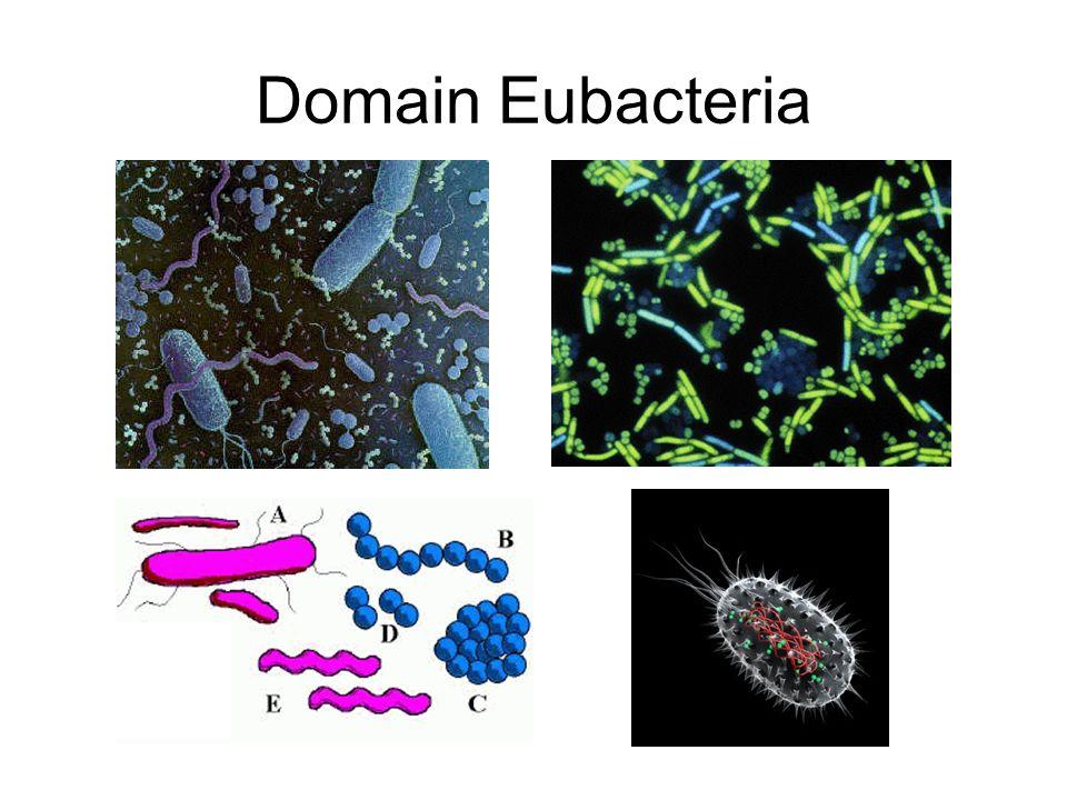 Domain Eubacteria Formerly a part of the kingdom monera