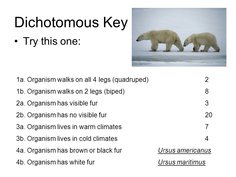 Dichotomous Key Try this one: