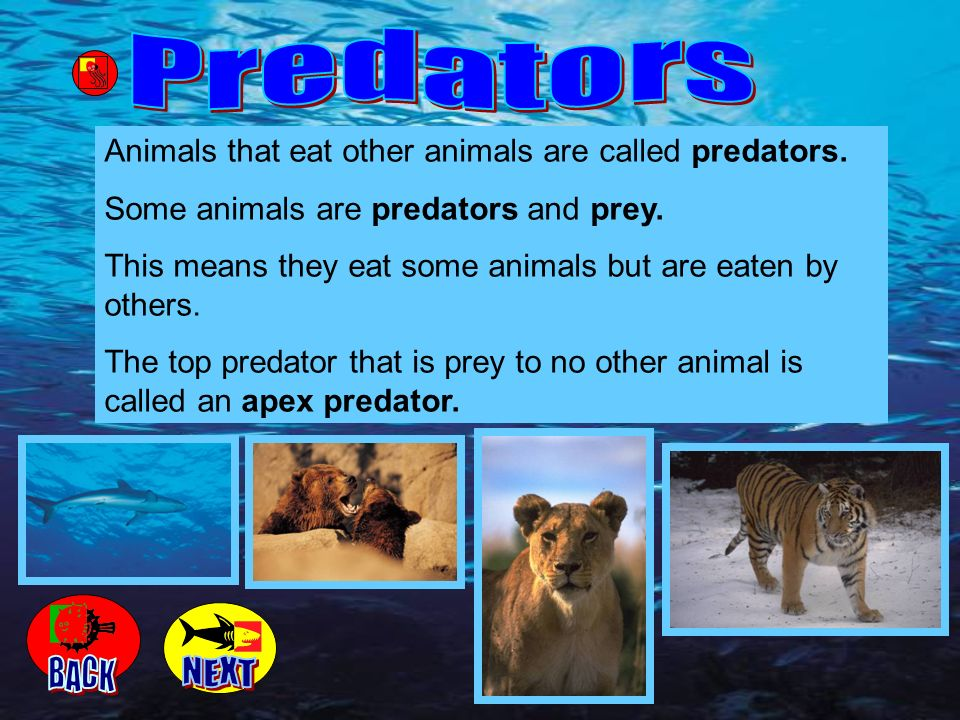 Predators Animals that eat other animals are called predators. Some animals are predators and prey.