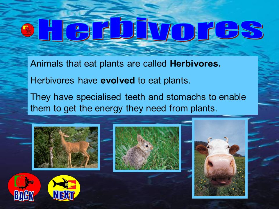 Herbivores BACK NEXT Animals that eat plants are called Herbivores.