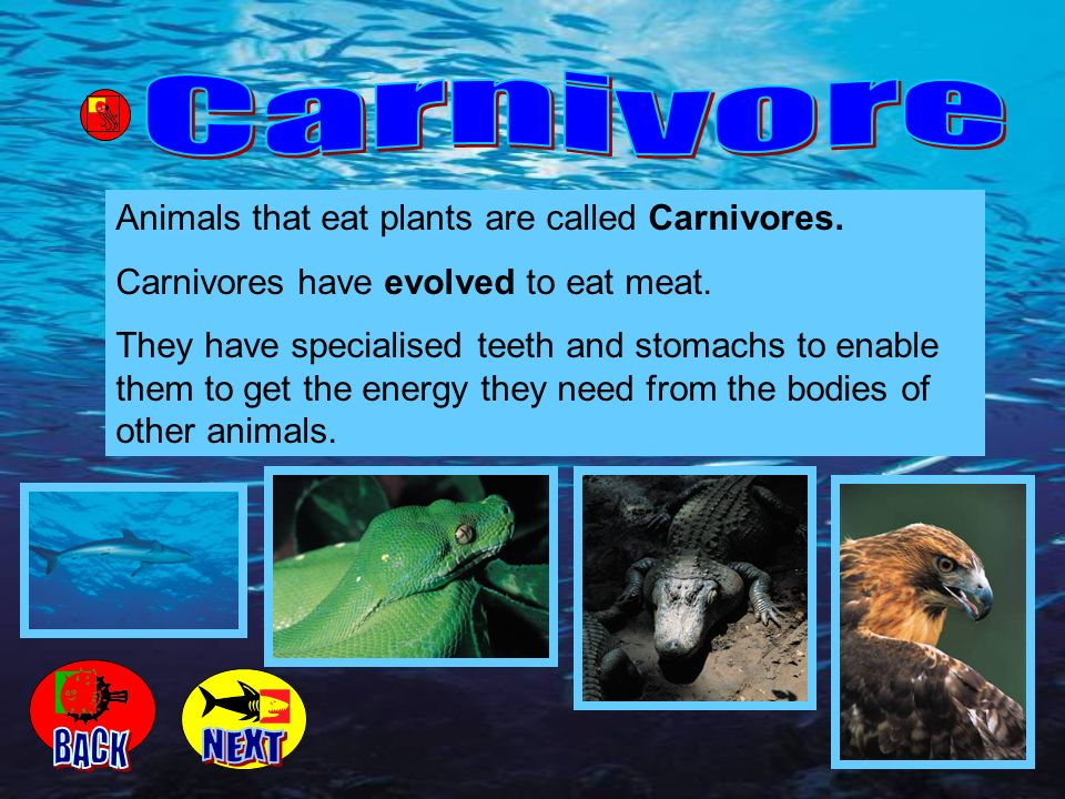 Carnivore BACK NEXT Animals that eat plants are called Carnivores.
