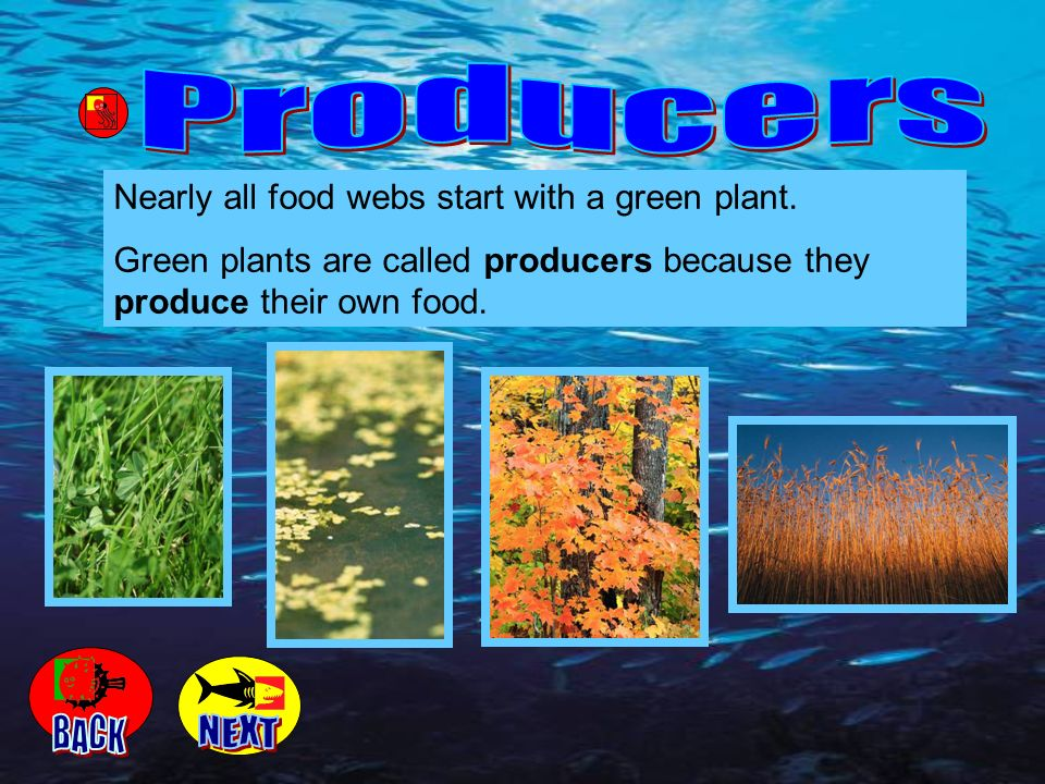Producers BACK NEXT Nearly all food webs start with a green plant.