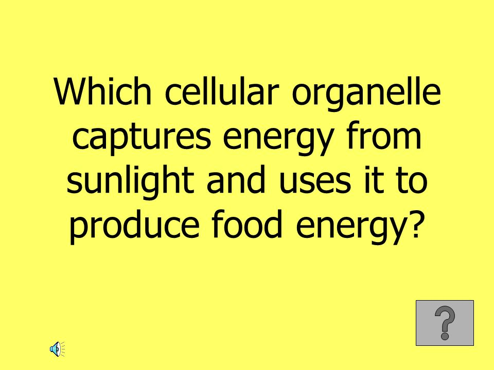 Which cellular organelle captures energy from sunlight and uses it to produce food energy