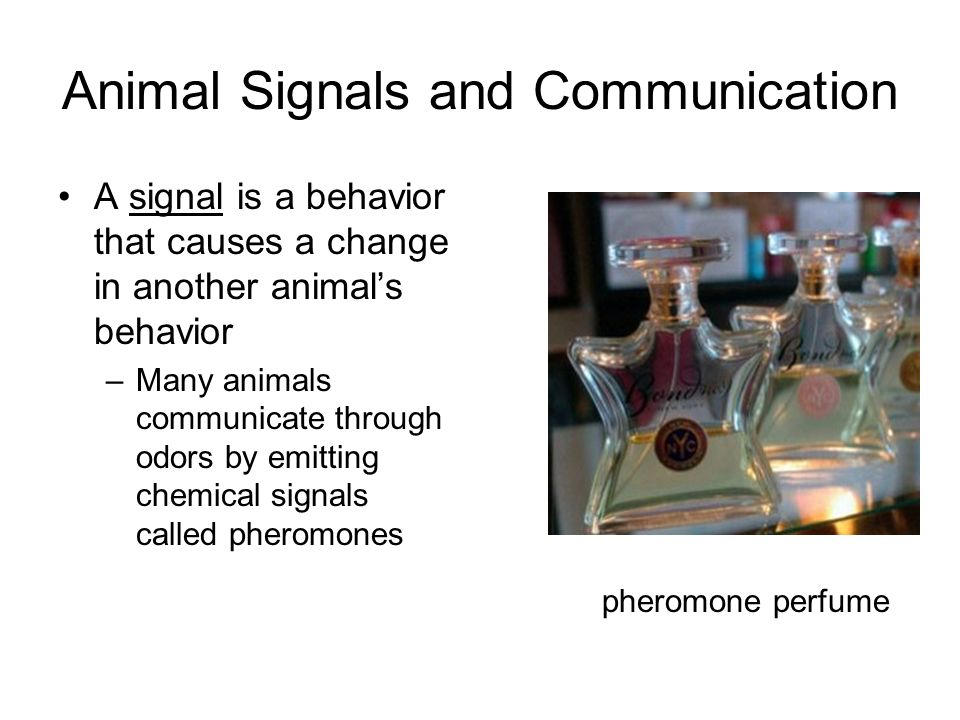 Animal Signals and Communication