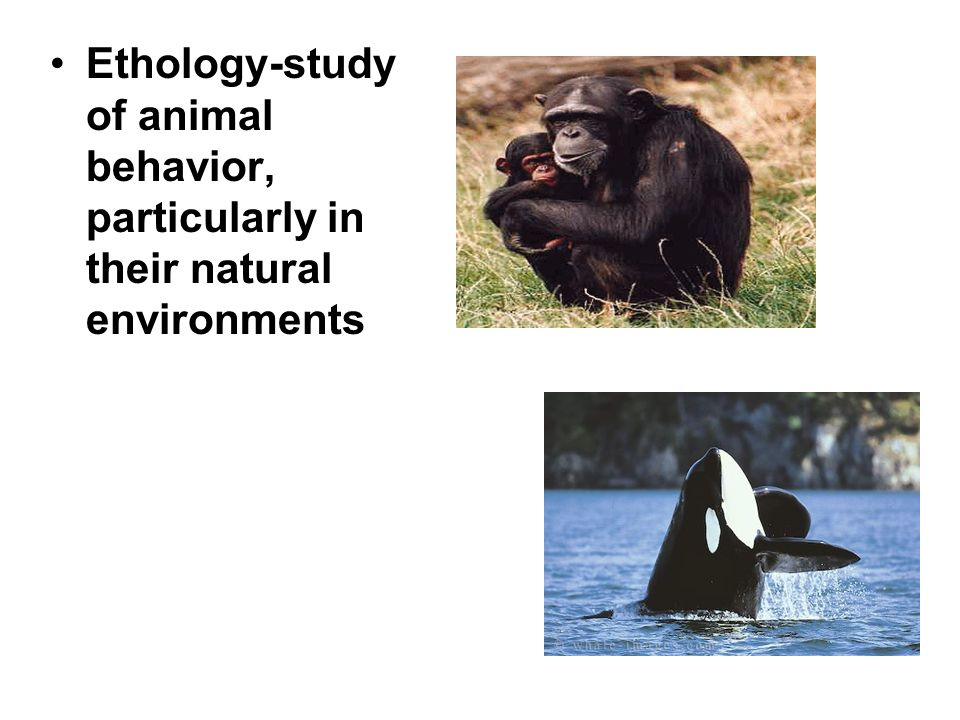 Ethology-study of animal behavior, particularly in their natural environments