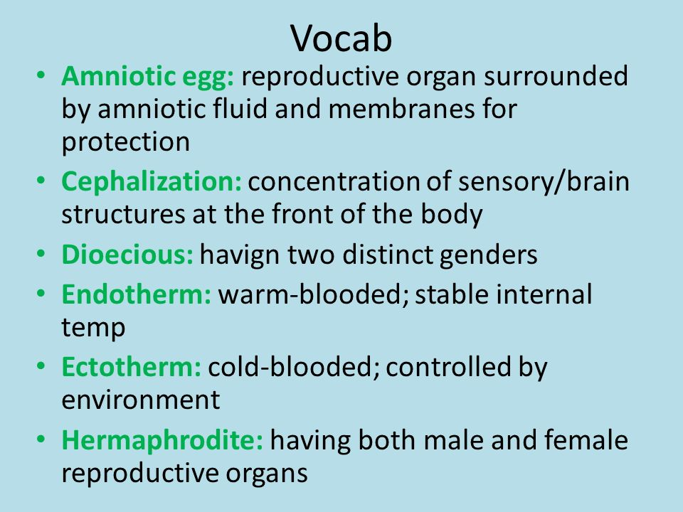 Vocab Amniotic egg: reproductive organ surrounded by amniotic fluid and membranes for protection.