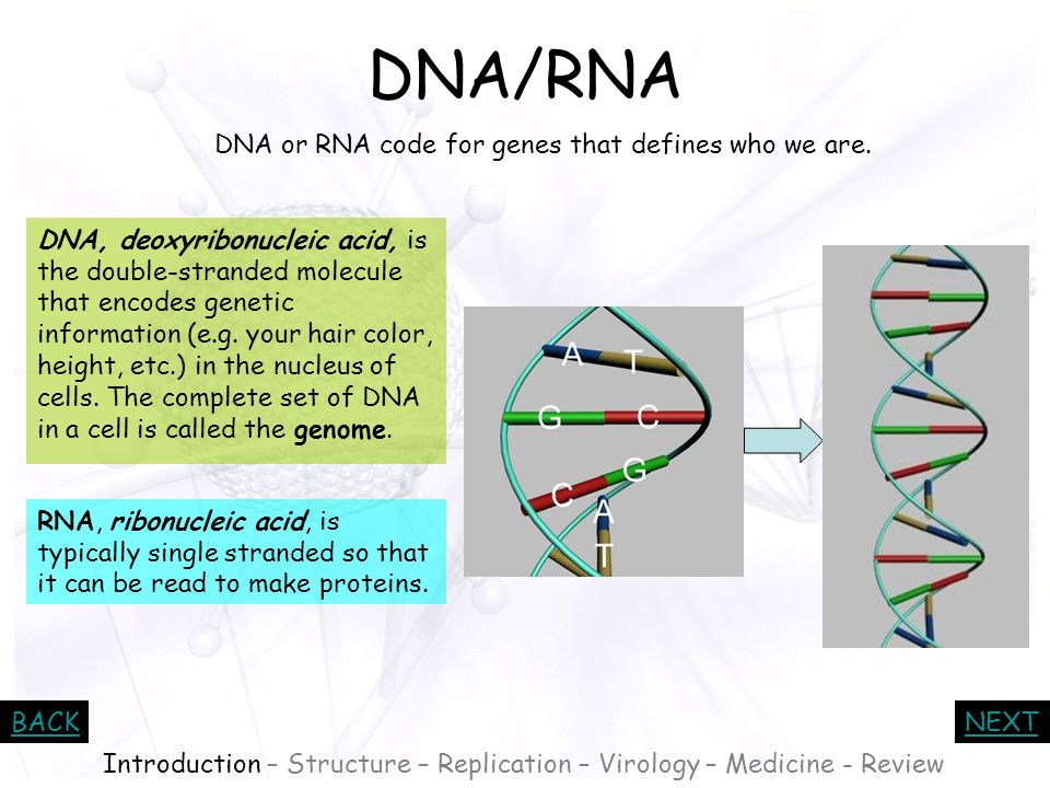 DNA/RNA DNA or RNA code for genes that defines who we are.