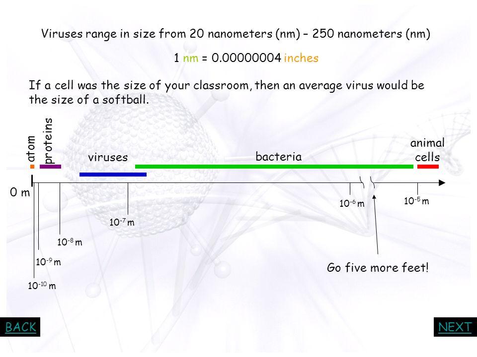 Viruses range in size from 20 nanometers (nm) – 250 nanometers (nm)