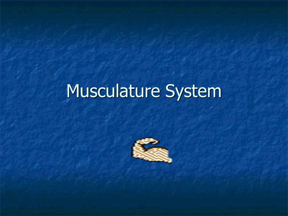 Musculature System