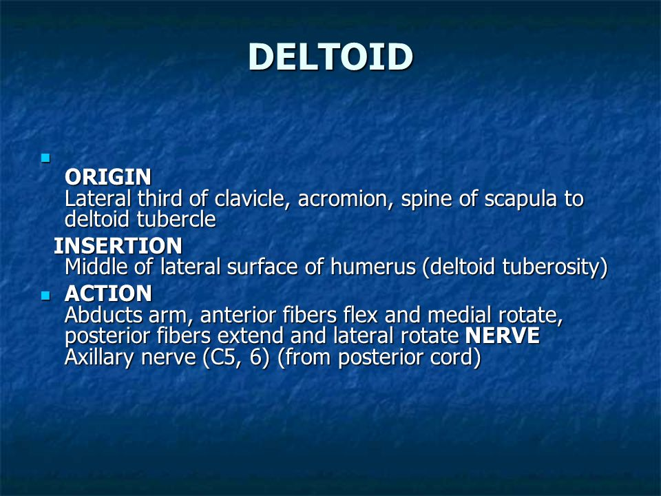DELTOID ORIGIN Lateral third of clavicle, acromion, spine of scapula to deltoid tubercle.