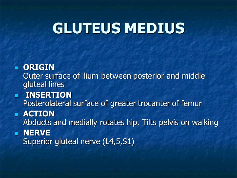 GLUTEUS MEDIUS ORIGIN Outer surface of ilium between posterior and middle gluteal lines.