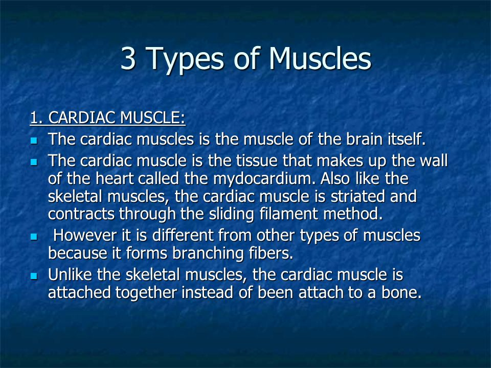 3 Types of Muscles 1. CARDIAC MUSCLE: