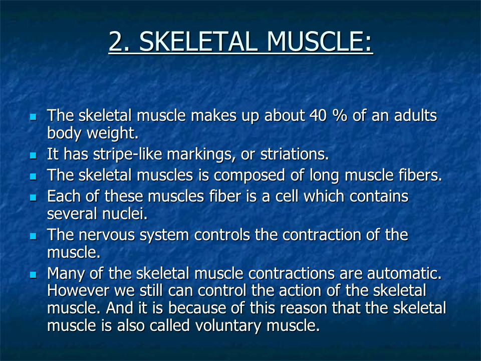 2. SKELETAL MUSCLE: The skeletal muscle makes up about 40 % of an adults body weight. It has stripe-like markings, or striations.