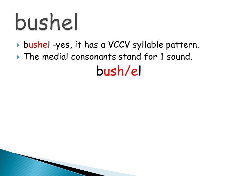 bushel bush/el bushel -yes, it has a VCCV syllable pattern.