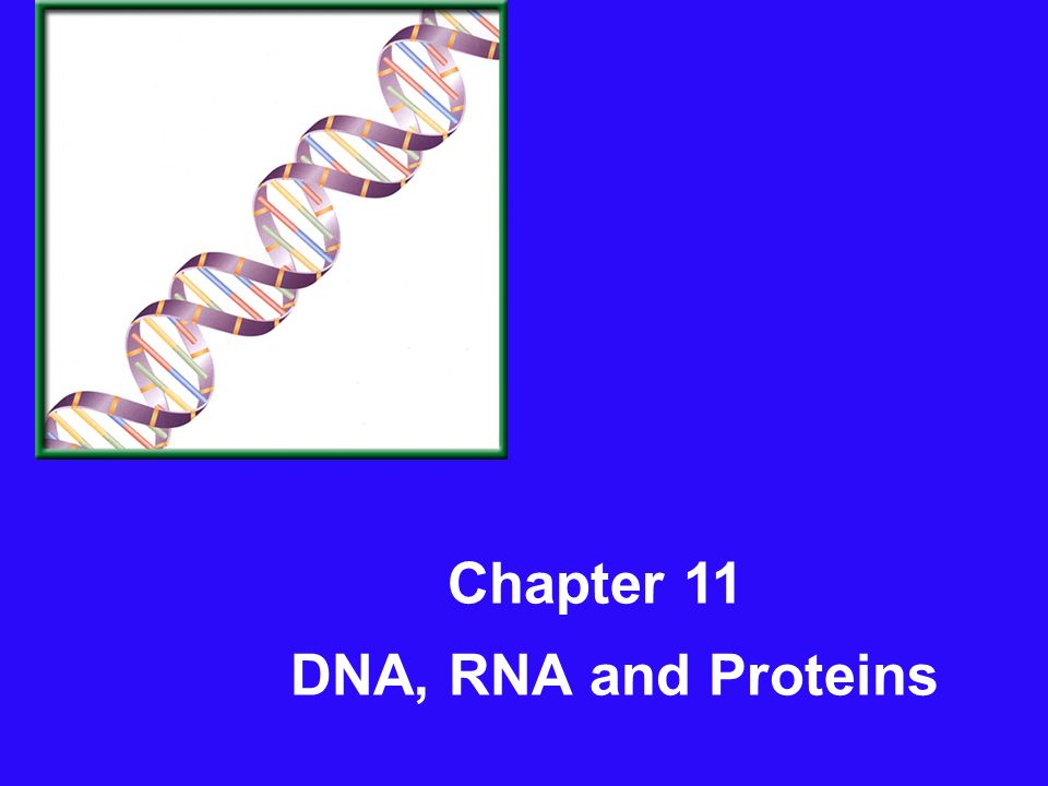 Chapter 11 DNA, RNA and Proteins