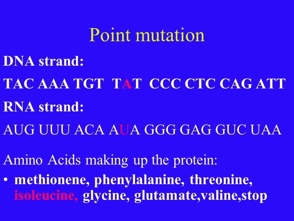 Point mutation DNA strand: TAC AAA TGT TAT CCC CTC CAG ATT RNA strand: