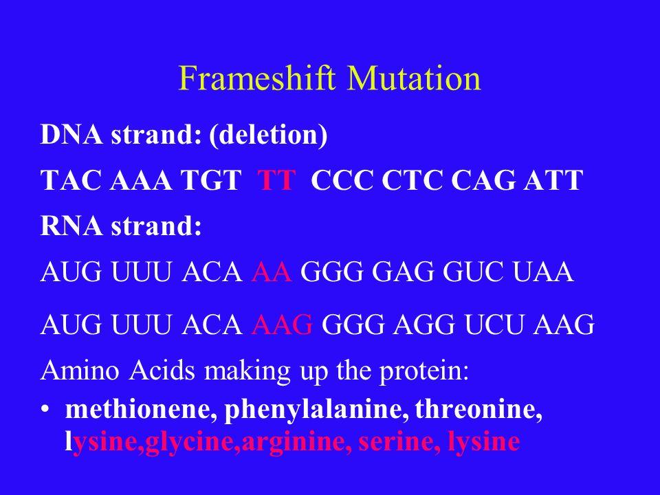 Frameshift Mutation DNA strand: (deletion)