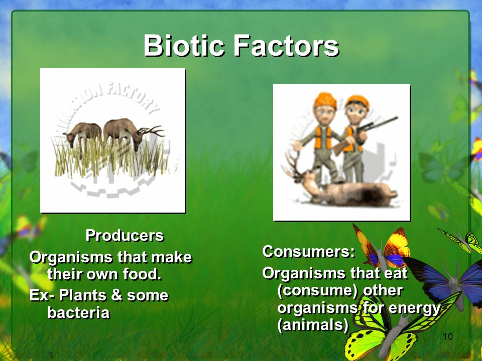 Biotic Factors Producers Organisms that make their own food.