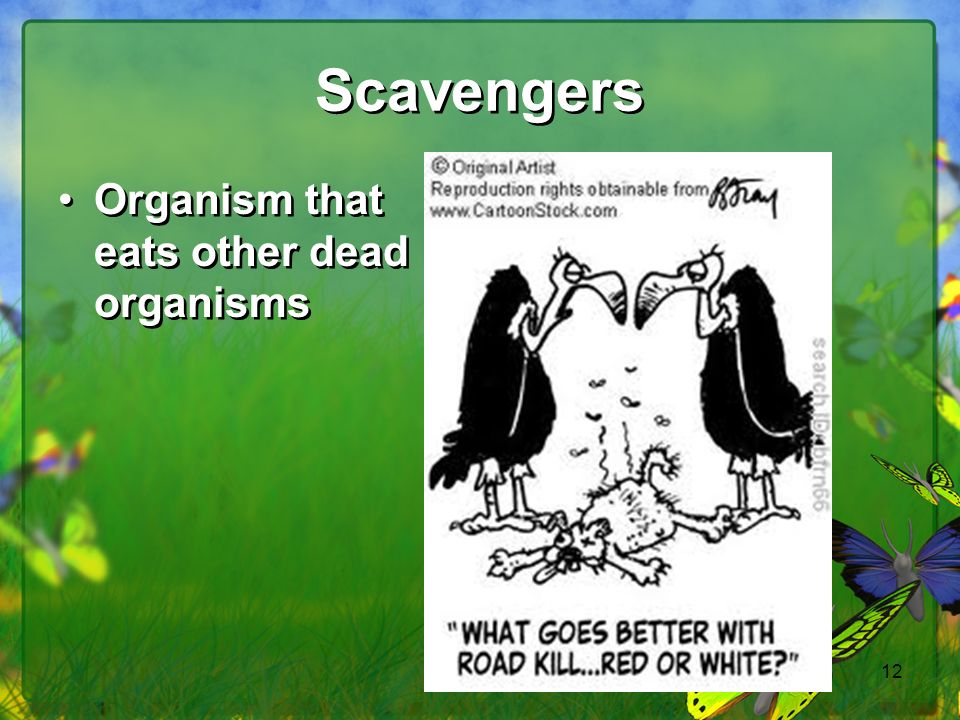 Scavengers Organism that eats other dead organisms