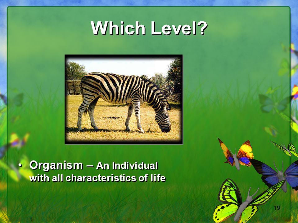 Which Level Organism – An Individual with all characteristics of life