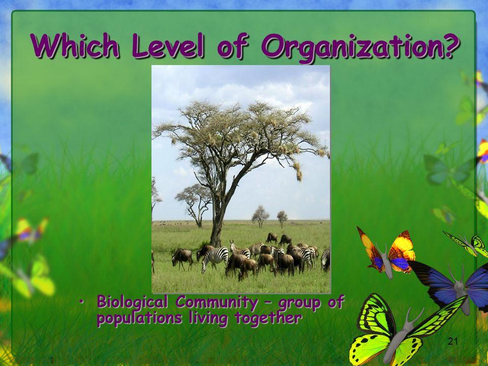 Which Level of Organization