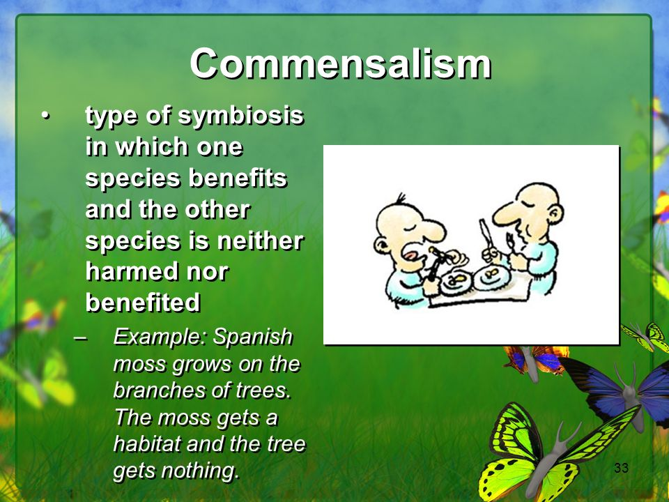 Commensalism type of symbiosis in which one species benefits and the other species is neither harmed nor benefited.