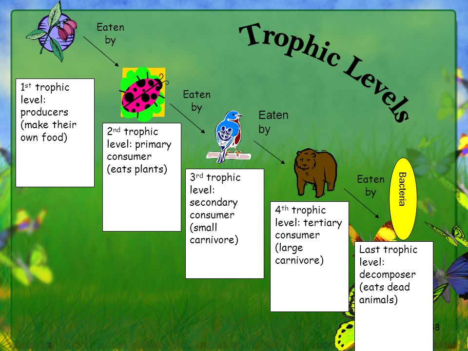 Trophic Levels Eaten by Eaten by