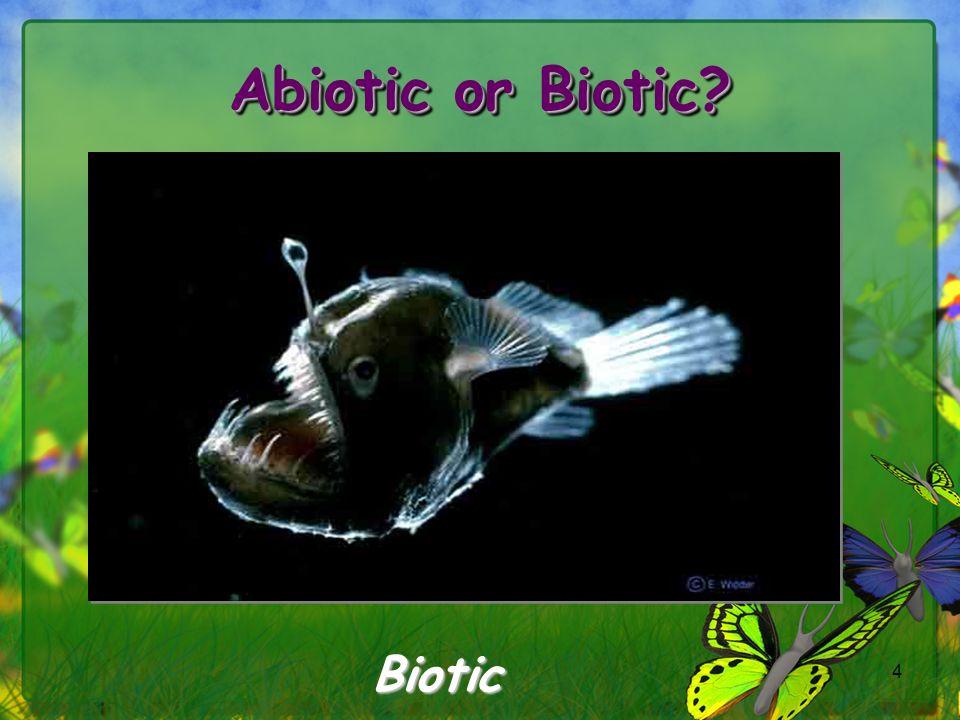Abiotic or Biotic Biotic