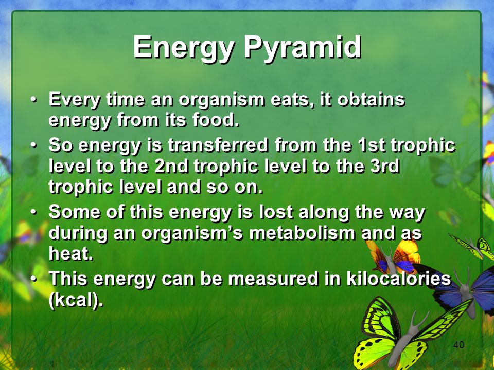Energy Pyramid Every time an organism eats, it obtains energy from its food.
