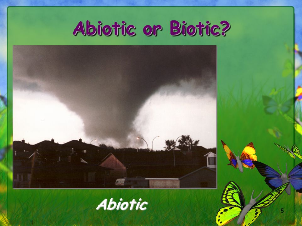 Abiotic or Biotic Abiotic