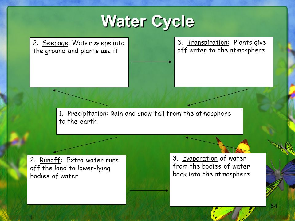 Water Cycle 2. Seepage: Water seeps into the ground and plants use it