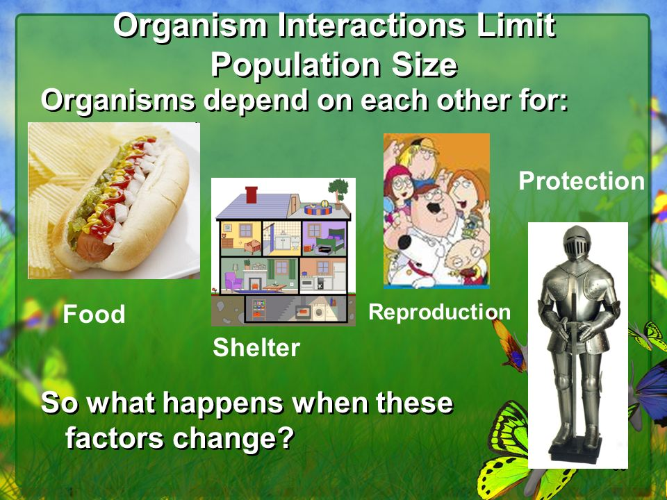 Organism Interactions Limit Population Size