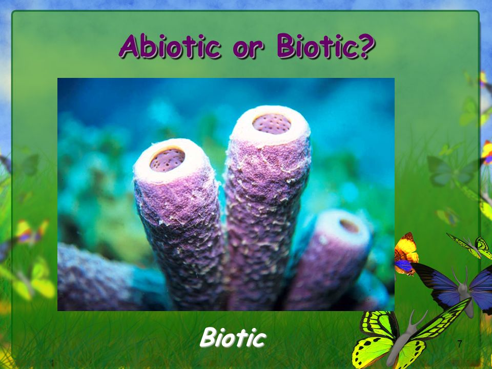 Abiotic or Biotic Biotic