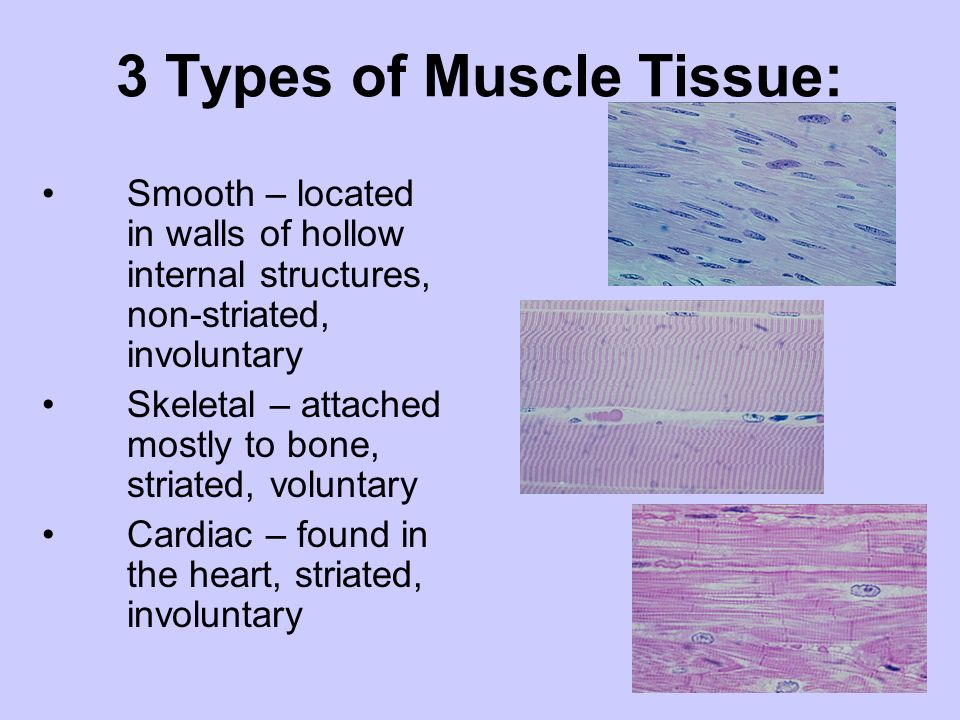 3 Types of Muscle Tissue: