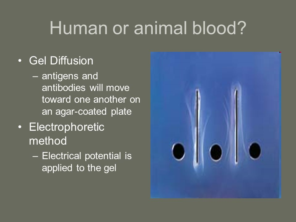 Human or animal blood Gel Diffusion Electrophoretic method