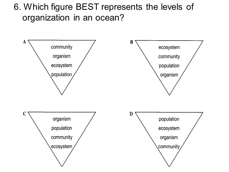 6. Which figure BEST represents the levels of organization in an ocean