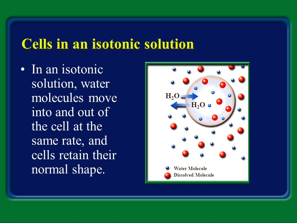 Cells in an isotonic solution