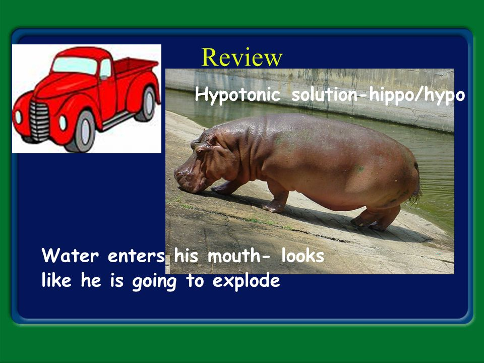 Review Hypotonic solution-hippo/hypo Water enters his mouth- looks