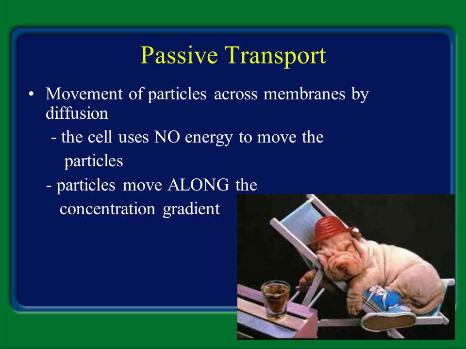 Passive Transport Movement of particles across membranes by diffusion