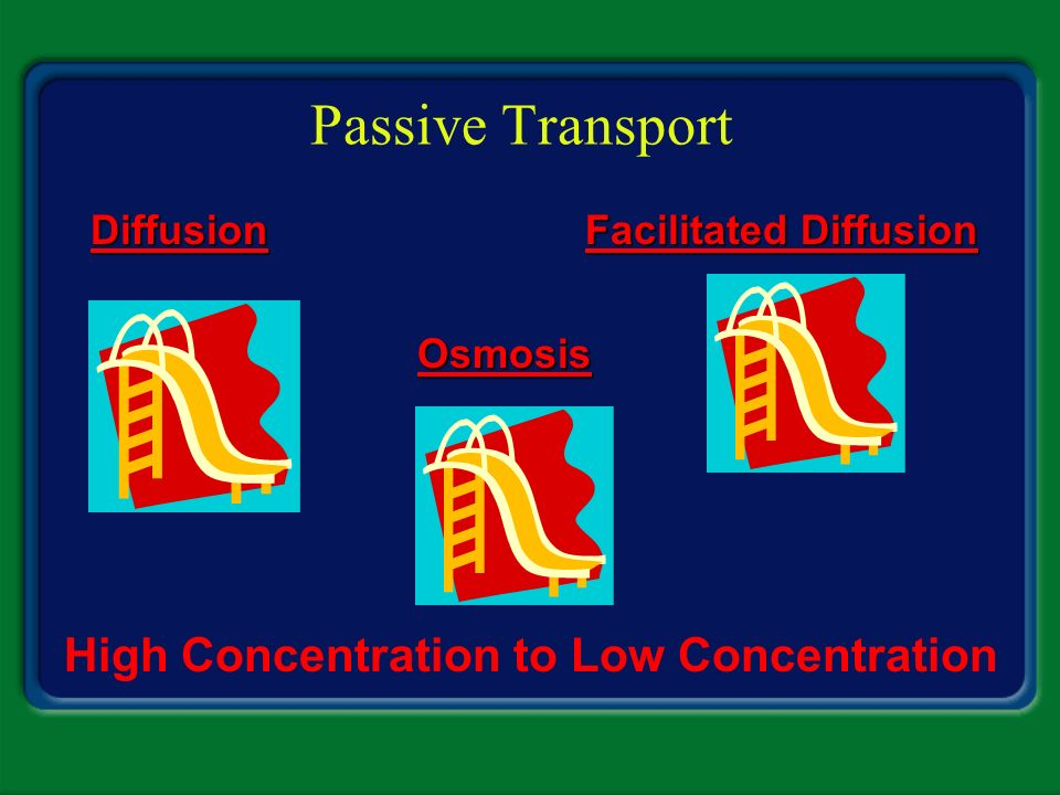 Passive Transport High Concentration to Low Concentration Diffusion