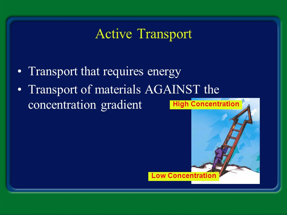 Active Transport Transport that requires energy