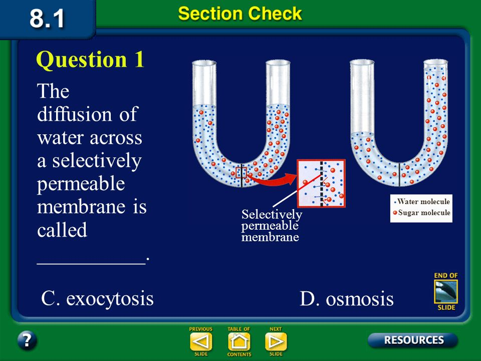 Question 1 The diffusion of water across a selectively permeable membrane is called __________. Water molecule.