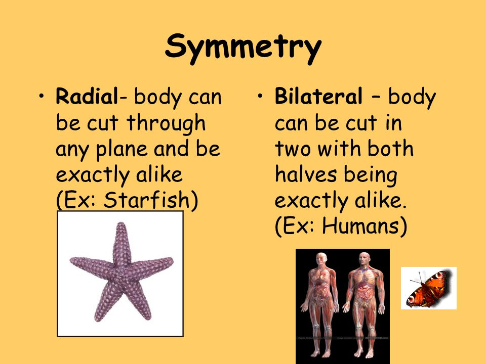 Symmetry Radial- body can be cut through any plane and be exactly alike (Ex: Starfish)
