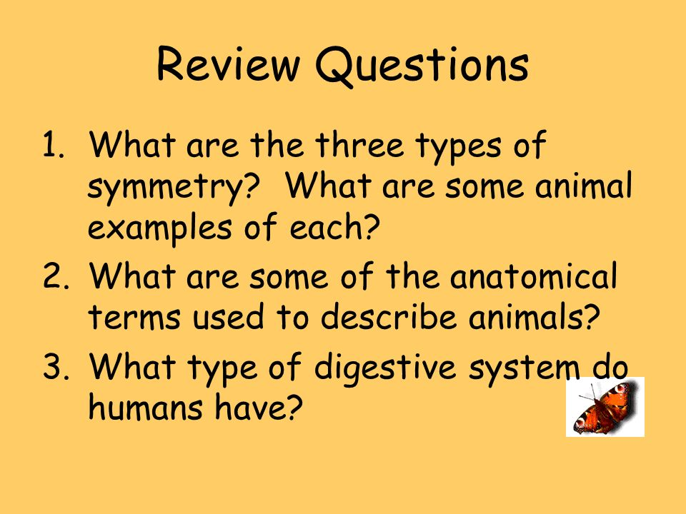 Review Questions What are the three types of symmetry What are some animal examples of each