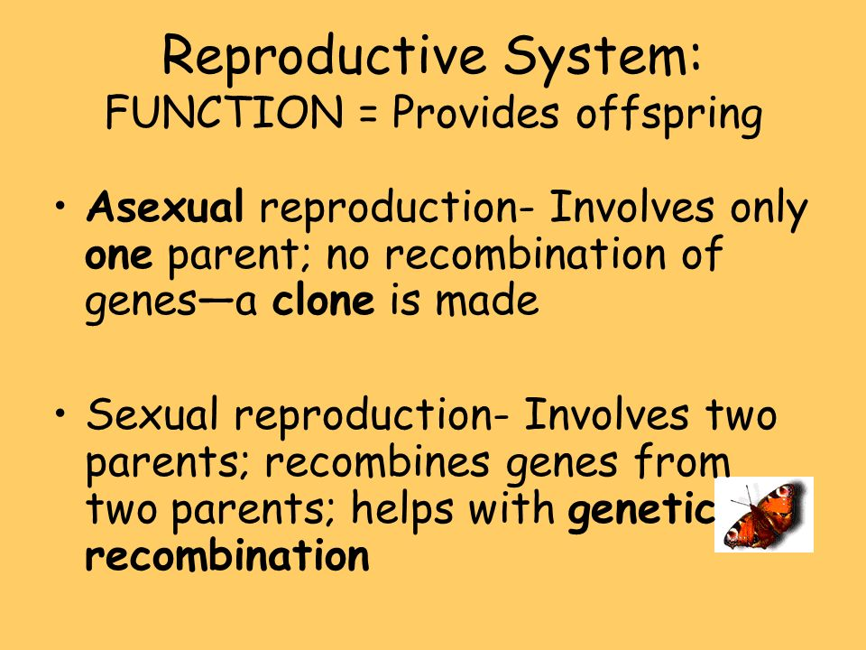Reproductive System: FUNCTION = Provides offspring