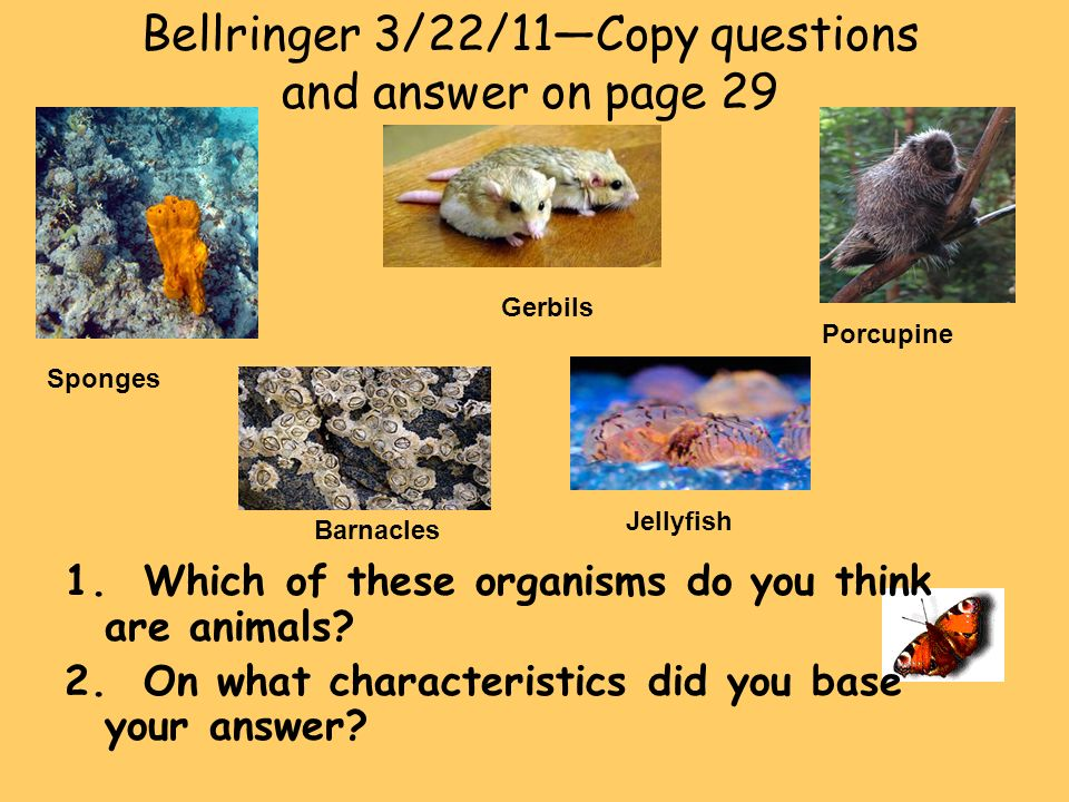 Bellringer 3/22/11—Copy questions and answer on page 29